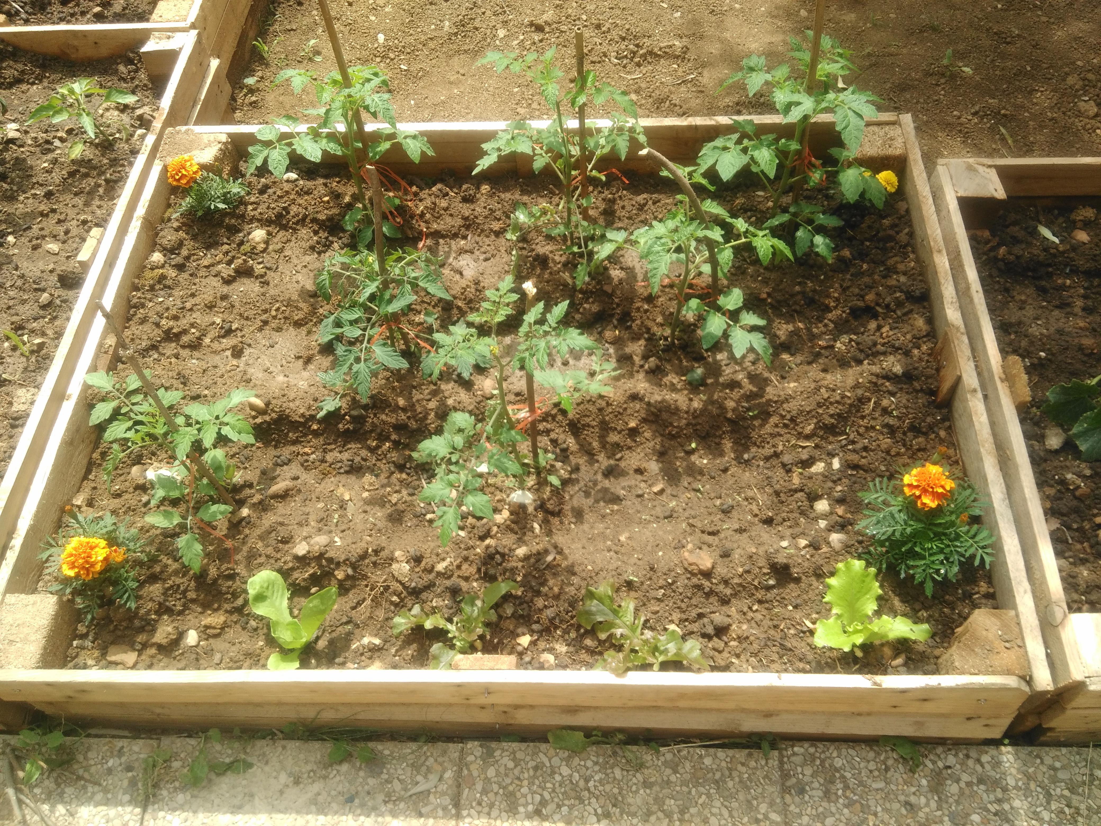 Arborescence un jardin cr par les stagiaires etaps for Cree un jardin